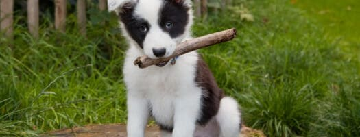 220+ Magnificent Dog Names That Start With M
